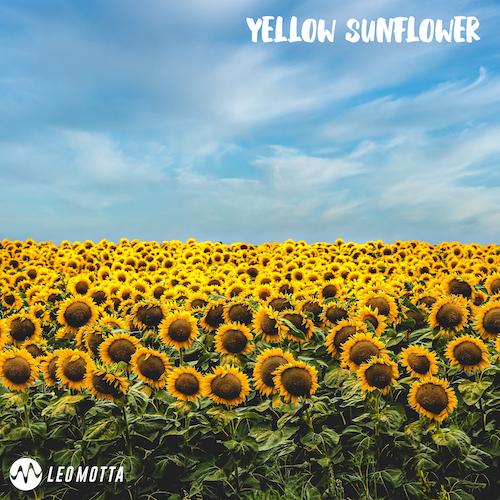 Yellow Sunflower Image